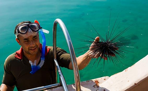 NUOTO DI SNORKELING Sei un appassionato di nuoto snorkeling? La crociera in dhow di un giorno intero prevede due soste per lo snorkeling e il nuoto. Preparati per il divertimento!
