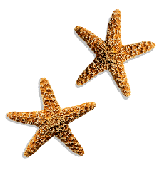 starfish-small