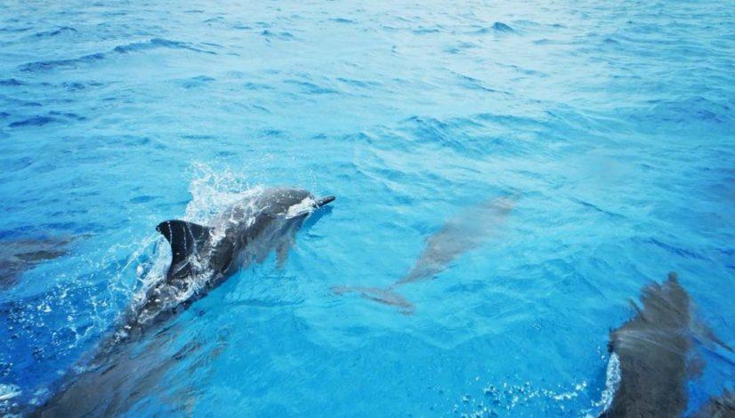 Osservare i delfini in Musandam